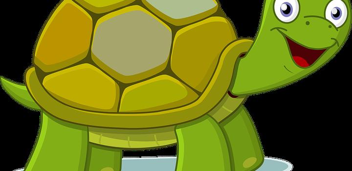 Schildkrötenklasse